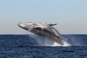 Day Adventure: Snorkeling & Whale Watching