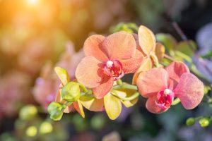 Puerto Vallarta's Award-Winning Botanical Gardens