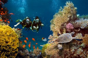 Diving In Puerto Vallarta: Paradise Under the Sea